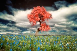 trees plants nature blue flowers photography