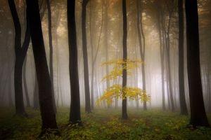 trees poem landscape shrubs nature forest mist morning