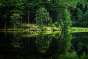 trees reflection water grass green spring nature forest hills lake landscape