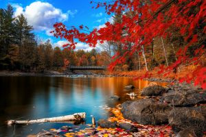 trees river landscape red leaves fall