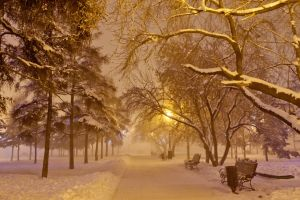 trees road winter snow