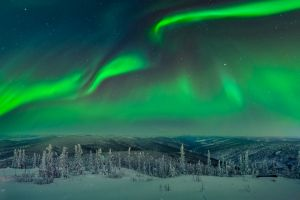 trees snow aurorae landscape