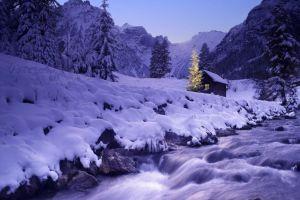 trees snow landscape winter