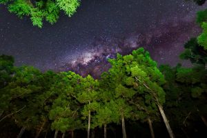 trees stars night leaves nature branch wood worm's eye view milky way clear sky forest