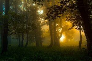 trees sunlight landscape forest shrubs green carpathians atmosphere mist nature
