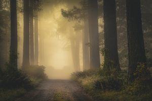 trees sunlight shrubs fall nature forest finland mist atmosphere landscape dirt road