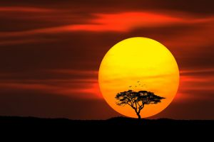 trees sunset sun umbrella thorn photography silhouette