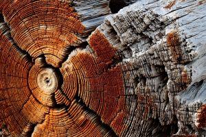 trees texture nature wood