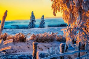 trees winter orange sky warm colors snow