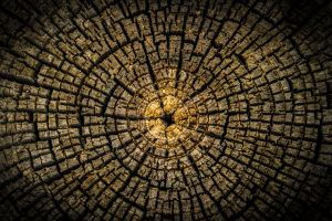 trees wood minimalism circle texture symmetry