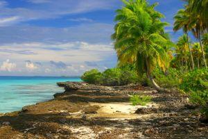 tropical clouds palm trees beach shrubs landscape sea island nature