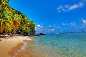 tropical palm trees beach landscape