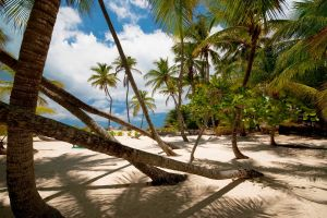 tropical palm trees shadow beach landscape clouds sand nature