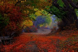 tunnel leaves fall fence trees landscape path shrubs colorful nature