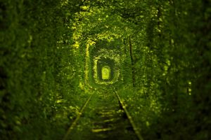 tunnel leaves nature green railway trees