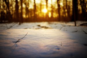 twigs depth of field winter bokeh trees sunlight snow