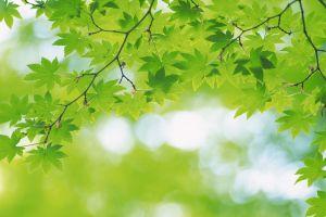 twigs leaves plants