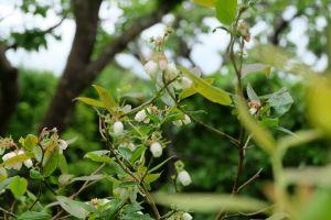 twigs outdoors garden flowers plants