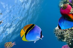 underwater coral fish photo manipulation