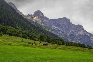 vehicle landscape austria tyrol mountains clouds alps forest grass summer green nature