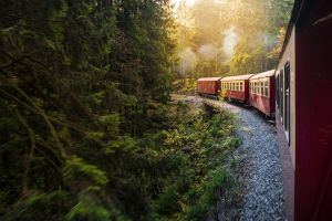 vintage train forest