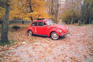 volkswagen beetle vehicle volkswagen car