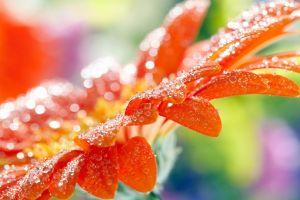 water drops flowers macro