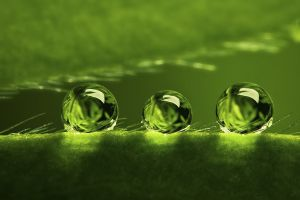 water drops macro plants