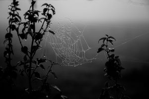 water drops monochrome spiderwebs black dew gray dark