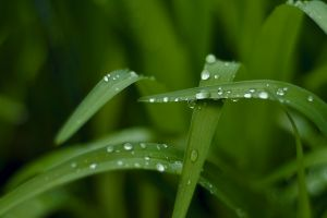 water drops plants photography