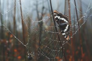 water drops spider spiderwebs trees butterfly leaves morning depth of field nature