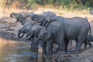 water elephant baby animals animals