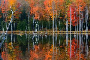 water forest trees landscape lake nature