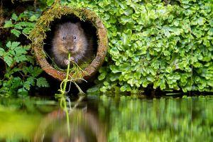 water mice animals river beavers plants nature