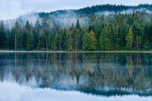 water mist trees forest hills lake reflection green nature landscape blue