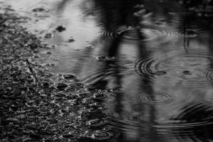 water monochrome nature rain