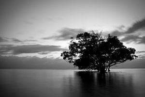 water monochrome trees nature