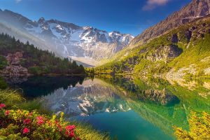 water snowy peak nature landscape wildflowers reflection forest mountains lake