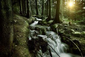 water sun nature plants trees landscape