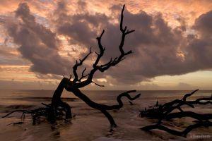 water sunlight sea wood sky horizon nature clouds