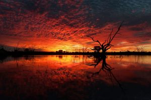 water trees silhouette nature reflection clouds landscape branch horizon plants mirrored sunset dead trees