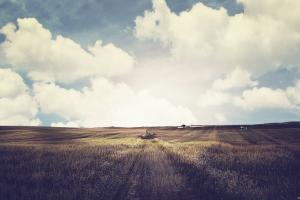 wheat landscape field nature plains