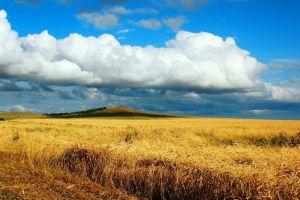 wheat nature field hills landscape summer