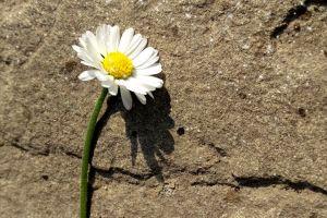 white flowers flowers plants dirt