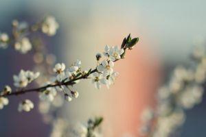 white flowers macro flowers