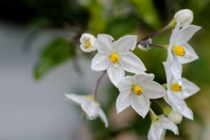 white flowers plants flowers