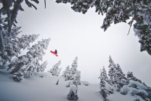 white overcast pine trees winter snowboarding snow sports