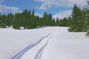 white snow winter nature