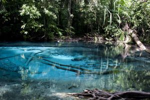 wilderness water river tropical forest jungle