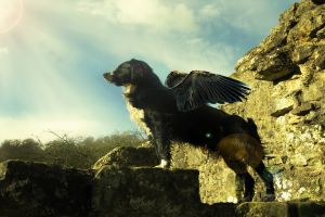 wings animals dog